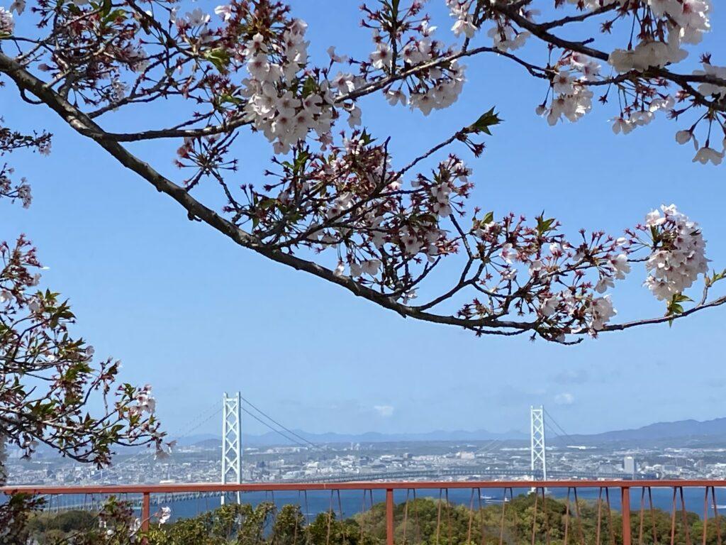 桜も終わりですね